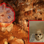 A 700,000-year-old skull discovered in Greece challenges Out-Of-Africa theory of Evolution