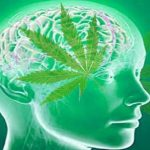 Research Proving Cannabis Kills Cancer Cells Safely: Suppressed Since 1974