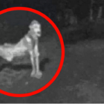 5 Strange Creatures Caught On Camera & Spotted In Real Life!
