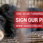 Save the Saddest Bears: END BEAR FARMING IN VIETNAM!