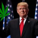 President Trump Set To Lift Marijuana Ban In All 50 States